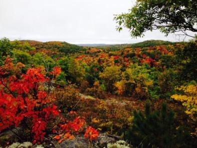 Algonquin Fall colours