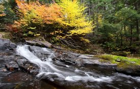 Algonquin Waterfall