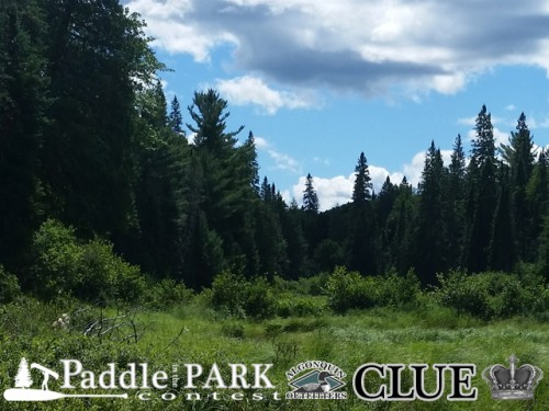 Paddle in the Park Contest
