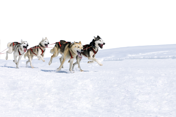World Dogsledding Championships @ Haliburton Forest and Wild Life Reserve | Ontario | Canada