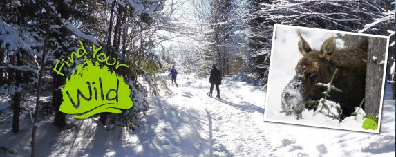 Guided Algonquin Snowshoe Safari @ Algonquin Outfitters- Oxtongue Lake | Dwight | Ontario | Canada