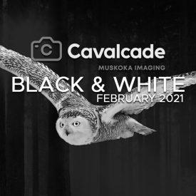 Cavalcade February 2021 Photo Contest